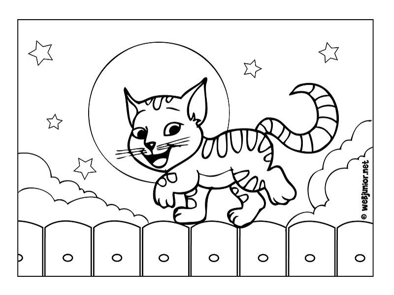 chaton sur une palissade 27