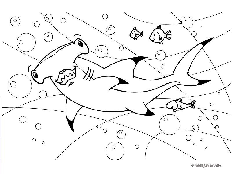 Requin marteau coloriage animaux gratuit sur webjunior - Coloriage requin a imprimer ...