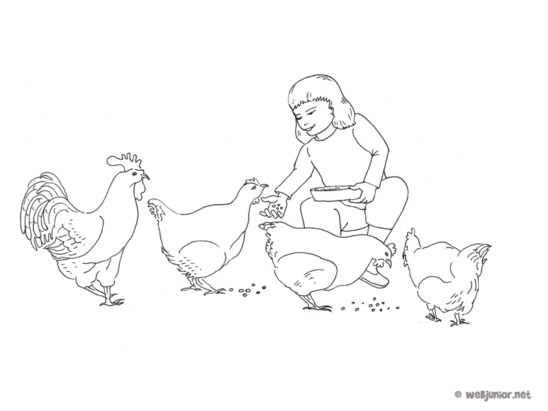 A la ferme les poules coloriage occasions gratuit sur - Dessin de poules ...