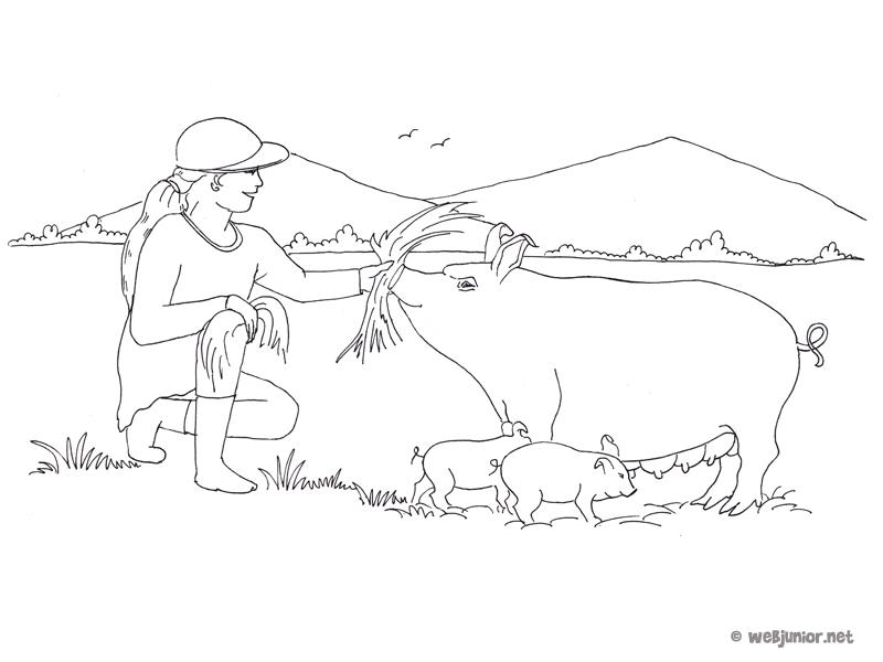 Coloriage Ferme Cochon.A La Ferme Le Cochon Coloriage Occasions Gratuit Sur Webjunior