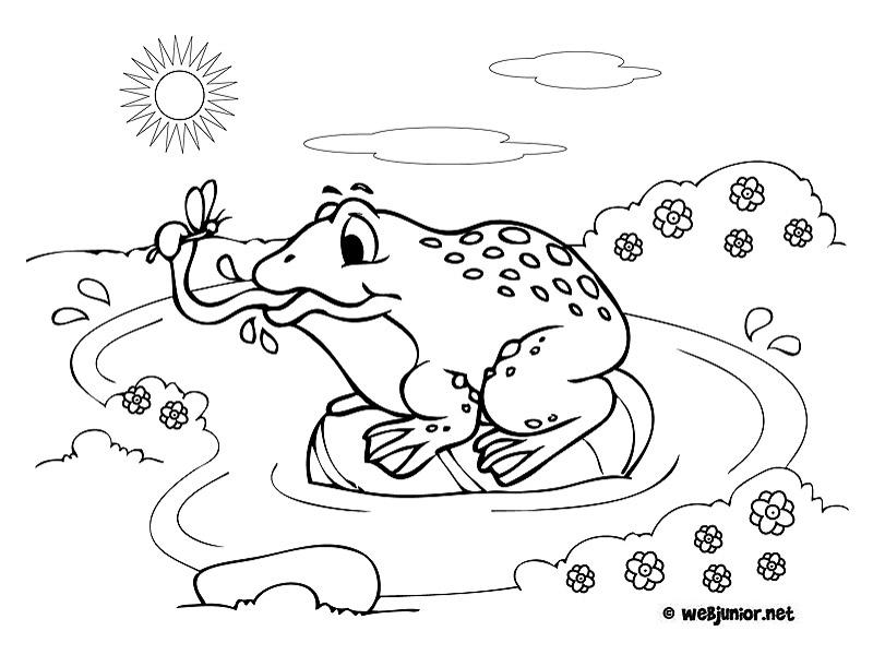 Grenouille gourmande coloriage animaux gratuit sur webjunior - Coloriage de grenouille ...