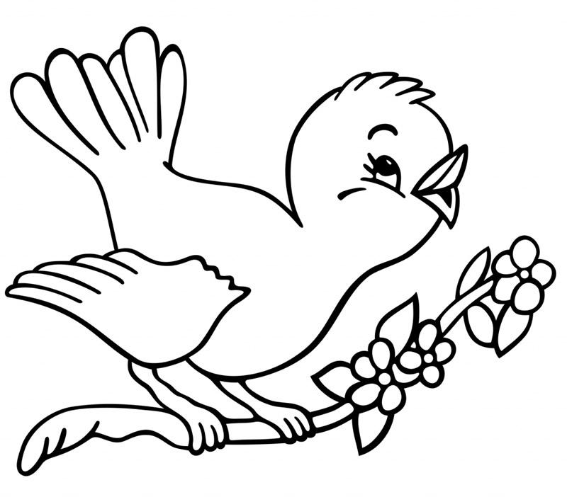 Petit Oiseau Sur Sa Branche Coloriage Animaux Gratuit Sur Webjunior